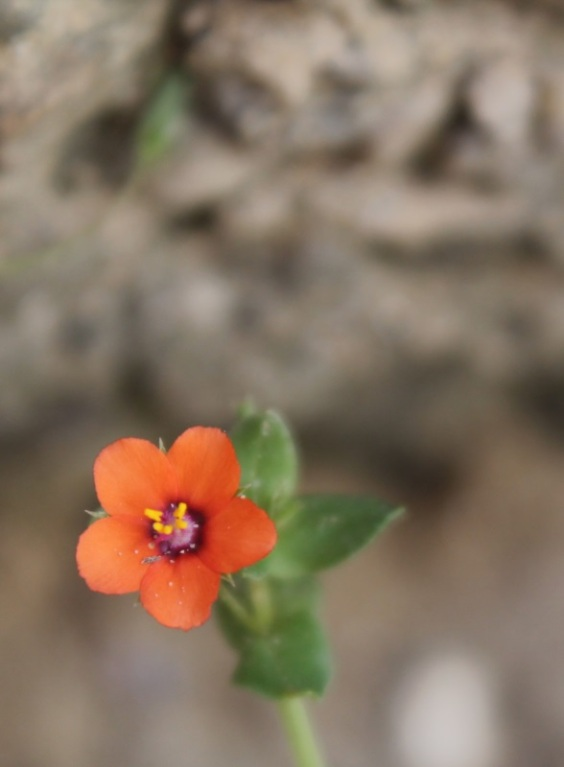 Blume orange#1